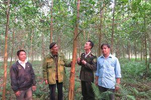 Cấp huyện được quyết định thu hồi rừng