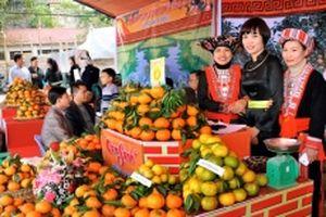 Liên kết trong sản xuất và tiêu thụ cam sành ở Hàm Yên