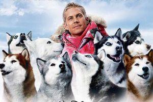 10 bộ phim hay nhất về những chú chó nhất định phải xem