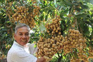 Úc xem xét nhập khẩu nhãn tươi Việt Nam
