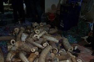 Hà Nội: Phát hiện số lượng lớn ngà voi tại cơ sở chế tác mỹ nghệ