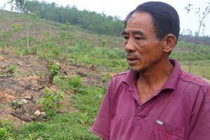 Dân điêu đứng vì dự án bò sữa 3.800 tỷ đột ngột dừng triển khai