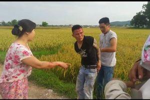 Côn đồ 'bảo kê', tranh giành địa bàn gặt lúa