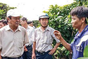 Cần Thơ: Xây dựng vùng chuyên canh cây ăn trái