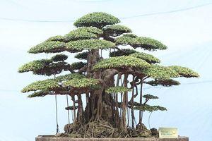 Từ tác phẩm Thụ Lâm Bồng Thạch nghĩ về phong thủy trong cây cảnh