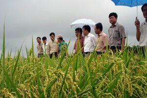 Làm thế nào để nông sản Việt Nam đi lên?