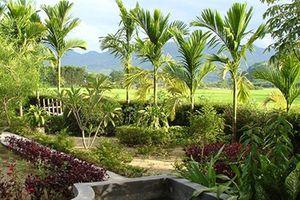 'Vườn'- Một mảnh tâm hồn Việt