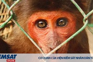 Nuôi nhốt động vật hoang dã: Thú vui vô cảm