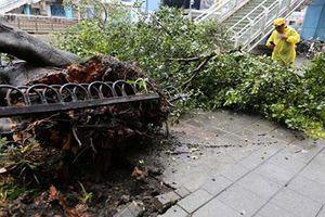 Loạt ảnh gây sốc về siêu bão Maria càn quét đảo Đài Loan