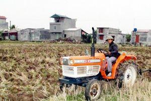 DĐĐT: Sản xuất ở Quang Trung đạt hiệu quả cao