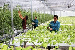 Hà Nội sau 10 năm mở rộng: Thu nhập bình quân của nông dân tăng 3 lần