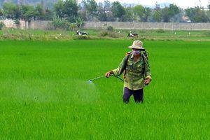 Báo động: Gần 1/2 số người xét nghiệm tại Hà Nội có thuốc BVTV trong máu