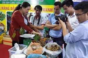 Khai mạc lễ hội sâm Ngọc Linh lần thứ 2