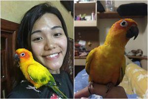 Cô vợ Việt đi tù một tháng vì đánh chết vẹt nhà