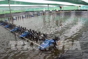 Cà Mau kiên quyết chấn chỉnh việc nuôi tôm siêu thâm canh gây ô nhiễm môi trường
