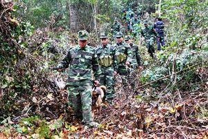 Quảng Nam: Xử phạt hàng trăm vụ vi phạm Luật Biên giới quốc gia
