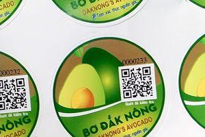 VNPT cấp miễn phí 35.000 tem xác thực nguồn gốc trái bơ ở Đắk Nông