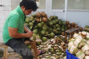 Trà Vinh nâng cấp chuỗi giá trị cây dừa