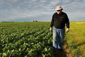 Nông dân Mỹ chật vật trong căng thẳng thương mại Mỹ- Trung