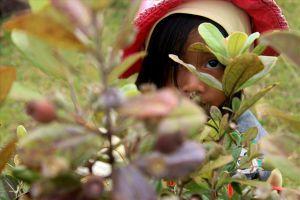 Kiếm bạc triệu mỗi ngày từ bán quả sim chín mọng trên thảo nguyên Bùi Hui