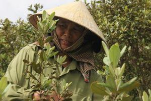 Nghệ An: Mùa sim, dân đổ xô lên núi hái, kiếm tiền triệu mỗi ngày