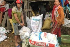 Nghệ An: Lạ, người dân đổ xô lên rừng hái quả bo bo, kiếm bộn tiền