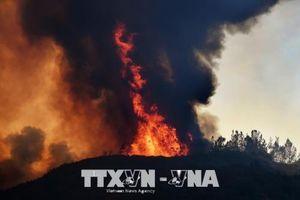 Cháy rừng tại Mỹ và Bồ Đào Nha