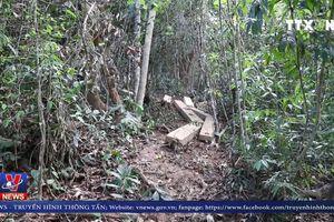 Lỗ hổng trong quản lý, bảo vệ rừng phòng hộ ở Bình Định