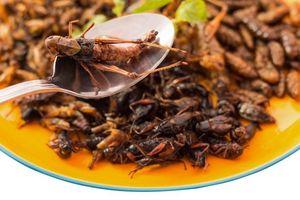Ăn đặc sản côn trùng giúp cải thiện sức khỏe đường ruột