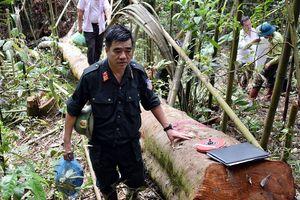 Phát hiện gần 90 mét khối gỗ quý bị khai thác trái phép