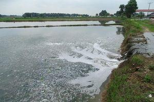 Văn Lâm (Hưng Yên): Xót xa lúa chết hàng loạt do doanh nghiệp xả thải, gây ô nhiễm