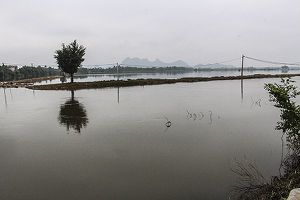 Hà Nội: Nước sông Bùi xuống dưới báo động 3 hơn 1m