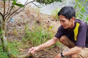 Nông dân giải thích việc tiêm nông dược vào cây cam