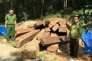 24 phách gỗ vô chủ ở bìa rừng