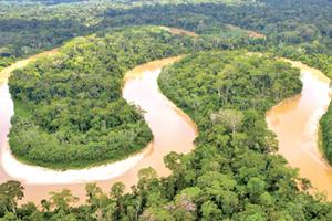 Peru: Hàng chục nghìn ha rừng Amazon bị tàn phá nghiêm trọng