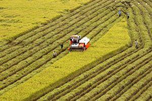 5 giải pháp đẩy mạnh tích tụ đất đai cho phát triển nông nghiệp