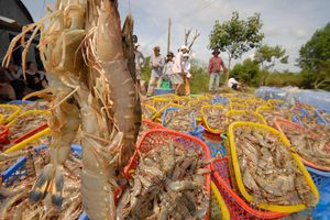 Giải pháp phát triển nuôi trồng thủy sản ven biển thích ứng biến đổi khí hậu