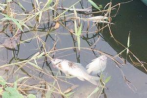 Cá chết, nước thải bốc mùi vì ô nhiễm