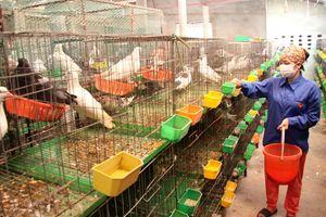 Đời sống người dân nông thôn Hà Nội: Không ngừng được cải thiện