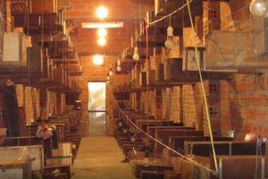 Khánh Hòa: Xây nhà nuôi ong dú thu trên 300 triệu đồng/năm