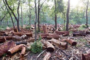 Lâm Đồng thu hồi 84 dự án làm mất 1.157ha rừng