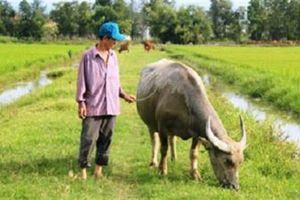 Dân nghèo Quảng Bình phải đóng phí mua đồng cỏ: Giải thích