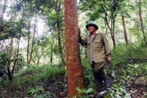 Quảng Bình hỗ trợ người dân trồng rừng