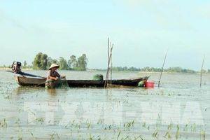 Đỉnh lũ tại Đồng bằng sông Cửu Long có khả năng xuất hiện sớm vào đầu tháng 10