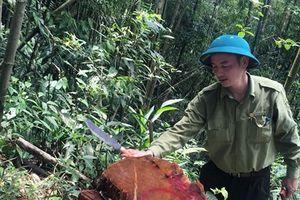 Khẩn trương điều tra vụ phá rừng tại Bắc Kạn