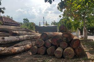 Xem xét kỷ luật hàng loạt lãnh đạo biên phòng sau vụ bắt trùm gỗ lậu Phượng 'râu'