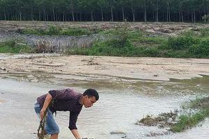 Gia Lai: Cát vùi lấp hàng chục ha lúa, người dân khốn khổ