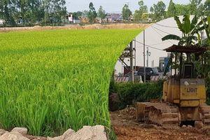 Điều tra vụ đất nông nghiệp bị san lấp trái phép