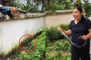 Clip: Cô giáo mầm non Lào Cai tay không bắt rắn hổ mang to bằng cổ tay