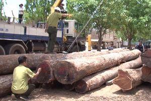 Đắk Lắk: Liên quan đến trùm gỗ lậu 'Phượng râu', xem xét kỷ luật nhiều lãnh đạo Bộ Chỉ huy BĐBP